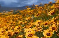 Clanwilliam Wild Flower Show